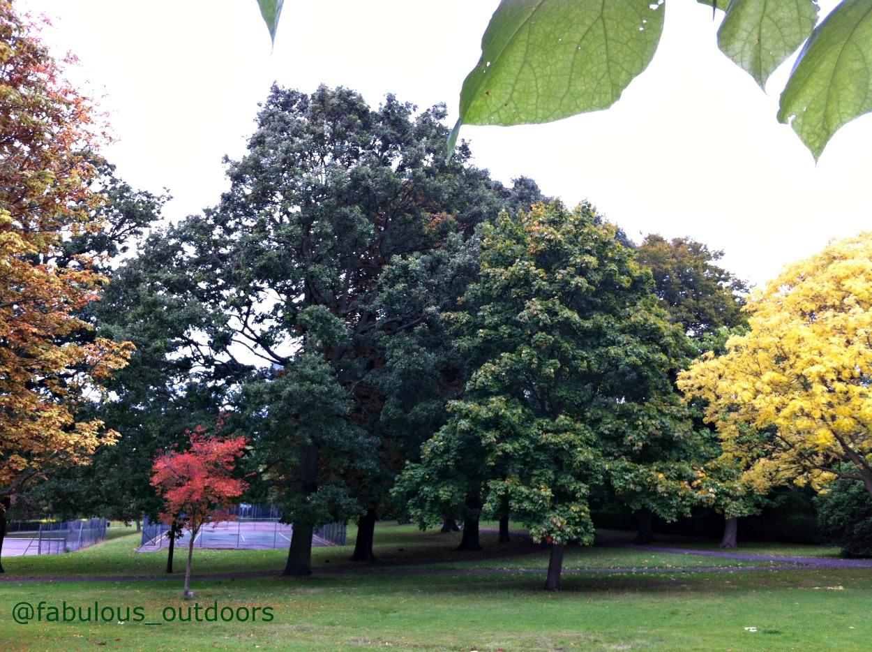 Early Autumn colours London park @abulous_outdoors