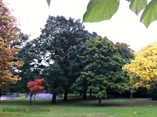 Early Autumn colours London park @abulous_outdoors