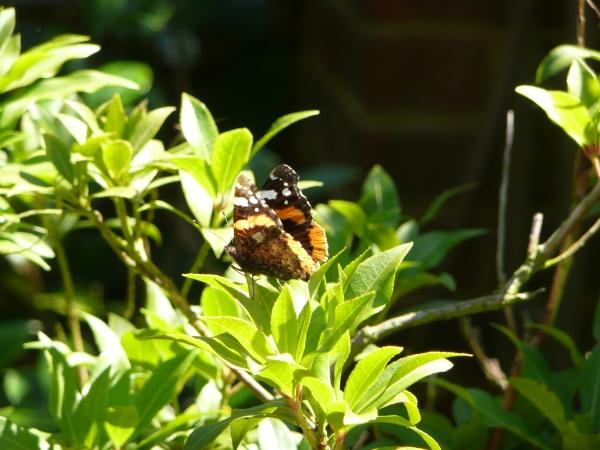 A beautiful Butterfly - fabulous outdoors