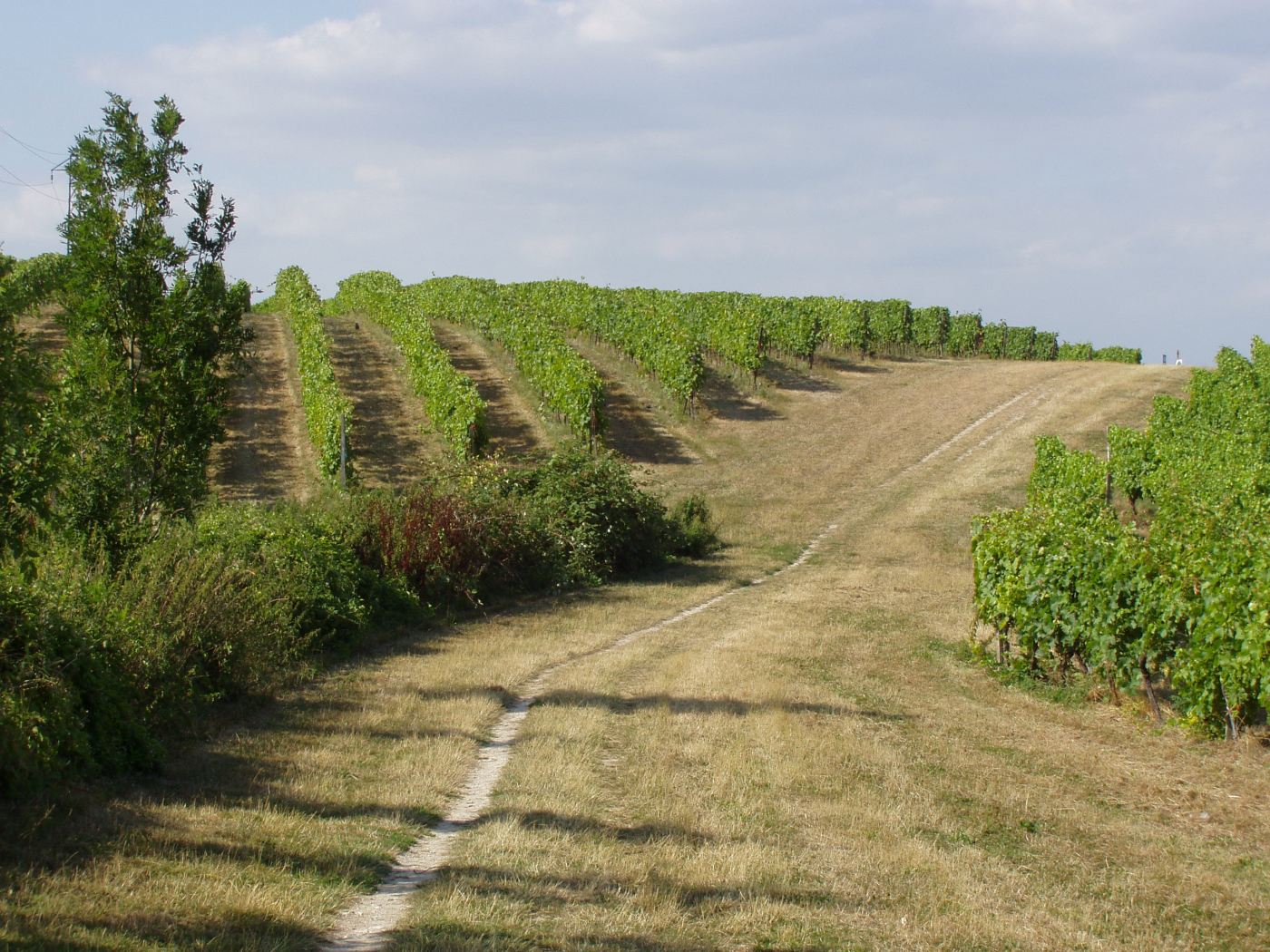 Walking trough British Vineyards @fabulous_outdoors