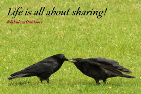 Life_is_all_about_sharing_birdwatching©fabulousOutdoors