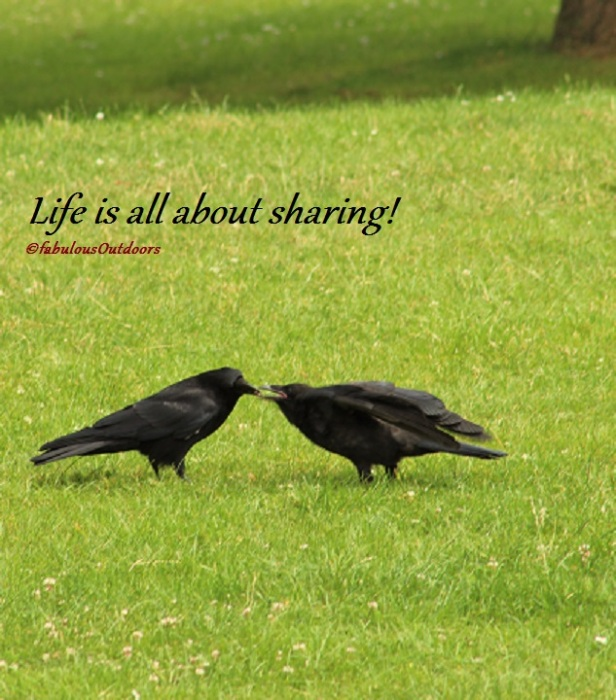 Life_is_all_about_sharing_©fabulousOutdoors