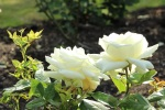 Flowers_Park_Hill_Croydon_Surrey_©fabulouOutdoors_IMG_0469