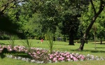 Flowers_Park_Hill_Croydon_Surrey_©fabulousOutdoors_IMG_0388