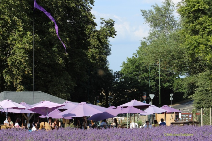Mayfield_Lavender_Bar_Fabulous_Outdoors_IMG_0865