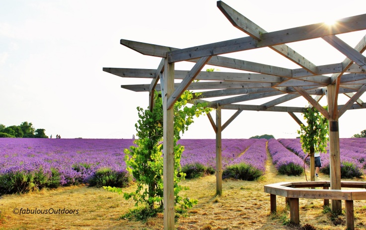 Mayfield_lavender_farm_fabulous-outdoors_IMG_0788