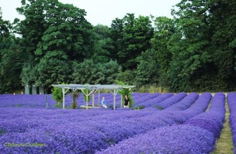 Mayfield_Lavender_Farm_Surrey_IMG_0852