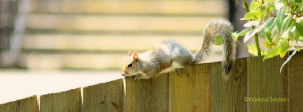 Squirrel_IMG_0431