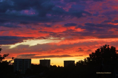 Sunset_Croydon (2)