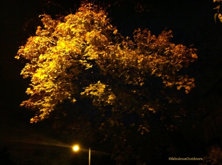 Autumn_Leaves_at_Night_@fabulous_outdoors