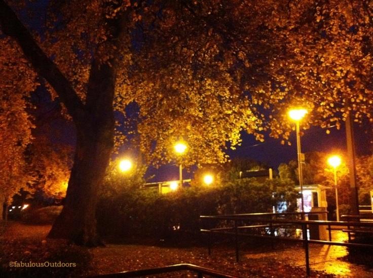Autumn_Leaves_Lloyds_Park_Croydon_Surrey_@fabulousOutdoors