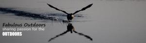 img_4125_660_me_and_my_shadow_wildlife_birds_reflection_c2a9fabriziomalisanphotography-2.jpg