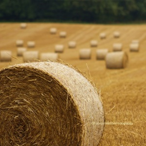 Wheat_Harvest_Hay_Bales__Field_Surrey_@FabrizioMalisanPhotography_640_IMG_8809