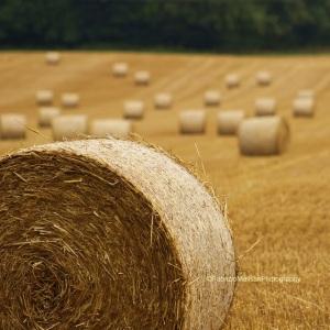 Wheat_Harvest_Hay_Bales__Field_Surrey_@FabrizioMalisanPhotography_640_IMG_8809