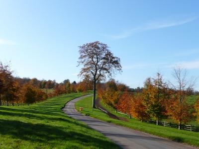 Autumn Colours Photos Surrey Hills ©Fabrizio-Malisan Fabulous-Outdoors Photography