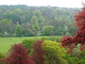 Autumn Colours on the Surrey Hills @fabulous_outdoors
