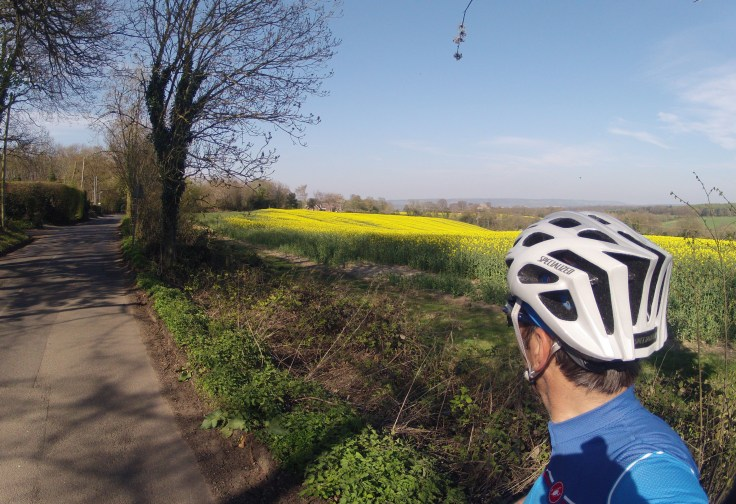 Cycling to discover the British countryside Surrey to Kent amongst rapeseed fields
