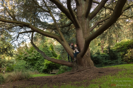 Big kids playing in the tree - Coombe Wood Park