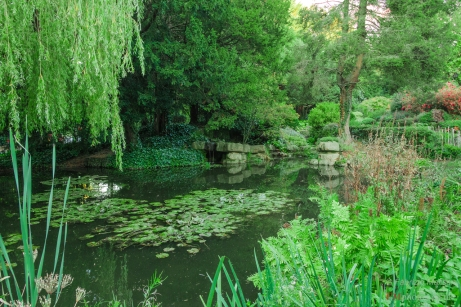 The beautiful pond surrounded by flowers and vegetation
