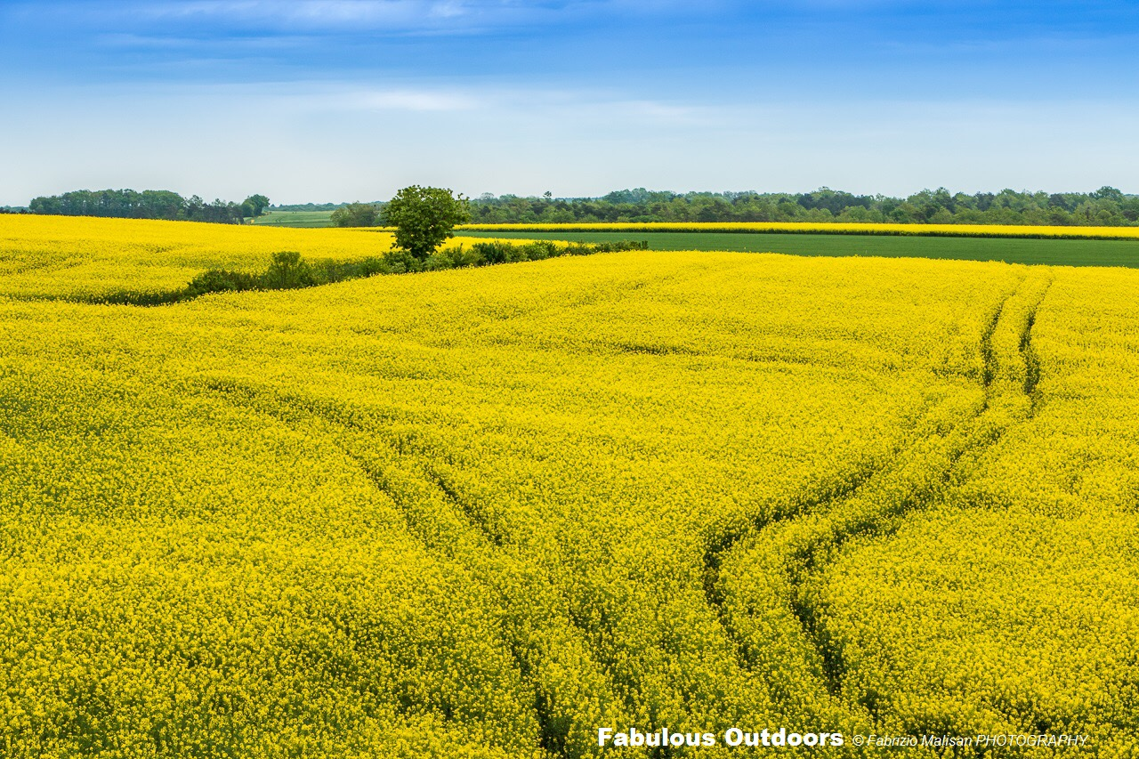 Yellow Field in France