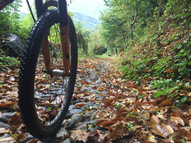 Serra Morenica autumn leaves on mountain bike trail